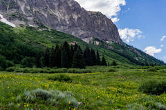 Paysage crêté et wildflowers de montagne du Colorado de butte Photo stock
