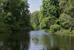 Paysage d'été avec la forêt et la rivière en île de Yelagin Image stock
