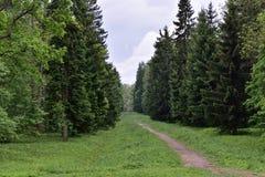 Paysage d'été avec la forêt, le ciel et le sentier piéton Photos libres de droits