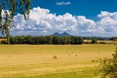 Paysage d'été avec le champ et la forêt photos libres de droits