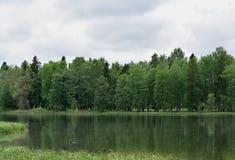 Paysage d'été avec le lac, la forêt et le ciel Images stock