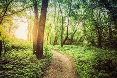 Paysage d'été avec le lever de soleil de coucher du soleil de Forest Path Going Ahead To photo stock