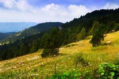 Paysage d'été avec le pré de montagne Image libre de droits