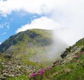 Paysage d'été avec les montagnes rocheuses et les belles fleurs sauvages dans la brume de matin photographie stock libre de droits