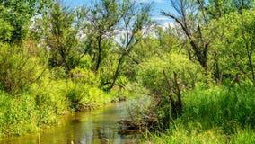 Paysage d'été avec un courant et végétation verte sur les banques, Russie, Ural Photo stock