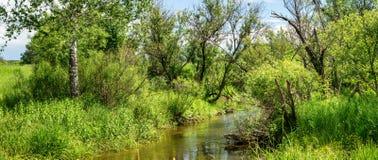 Paysage d'été avec un courant et végétation verte sur les banques, Russie, Ural Photographie stock libre de droits