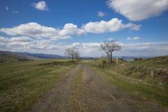 Paysage d'été d'herbe et d'arbres Image libre de droits
