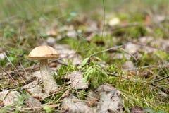 Paysage d'été dans la forêt Photographie stock libre de droits