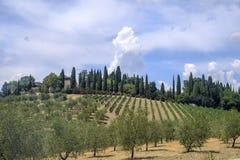 Paysage d'été dans la région Toscane de chianti image stock