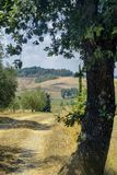 Paysage d'été dans la région Toscane de chianti image libre de droits