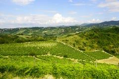 Paysage d'été dans Monferrato (Italie) Photographie stock