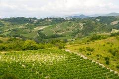 Paysage d'été dans Monferrato (Italie) Image libre de droits