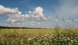 Paysage d'été dans un domaine donnant sur les usines d'énergie éolienne photo libre de droits