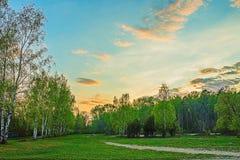 Paysage d'été de jeune forêt verte avec le ciel bleu de coucher du soleil Photo libre de droits