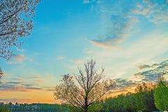 Paysage d'été de jeune forêt verte avec le ciel bleu de coucher du soleil Photo stock