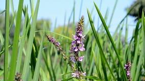 Paysage d'été, diversité de nature Image stock
