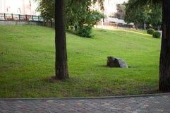 Paysage d'été du parc de ville Image libre de droits