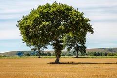 Paysage d'été du Sussex photo libre de droits