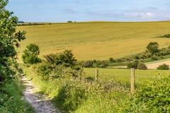 Paysage d'été du Sussex photographie stock libre de droits