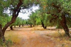 Paysage d'été en Crète images stock