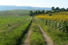 Paysage d'été en Marches (Italie) Photo stock
