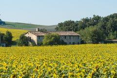 Paysage d'été en Marches (Italie) Image stock