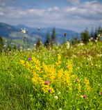 Paysage d'été en montagnes de Ceahlau Image libre de droits