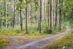 Paysage d'été : forêt, arbres épais, route dans la forêt Photos libres de droits