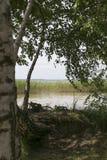 Paysage d'été sur le lac photo libre de droits