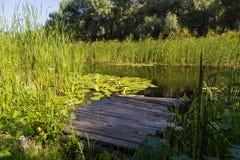 Paysage d'été sur le lac de forêt avec des nénuphars, des roseaux et W Photographie stock libre de droits