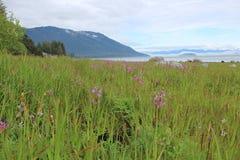 Paysage d'île de l'Alaska Photographie stock