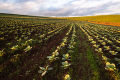 Paysage d'agriculture de terres cultivables photographie stock libre de droits