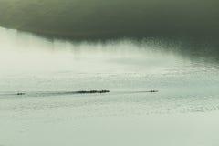 Paysage d'air de Paddlers de canoës photos libres de droits