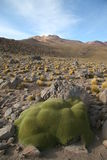 Paysage d'Altiplano Photographie stock