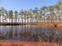 Paysage d'arbre Image stock