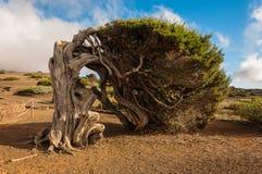 Paysage d'arbre Photo libre de droits