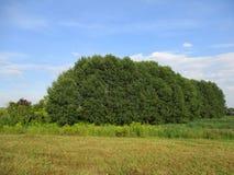 Paysage d'arbre Photos stock