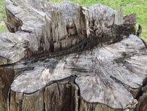 Paysage d'arbre de tronçon photos libres de droits