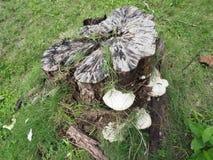Paysage d'arbre de tronçon photographie stock libre de droits