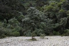 Paysage d'arbres Images libres de droits