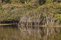 Paysage d'arbres de lagune de rivière Image stock