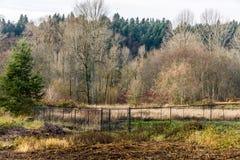 Paysage d'arbres d'hiver images libres de droits