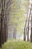 Paysage d'automne Image stock