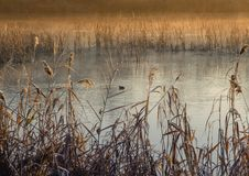 Paysage d'automne, arbres jaunes près d'une rivière calme photos libres de droits