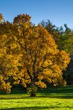 Paysage d'automne avec des arbres à feuilles caduques en parc Photographie stock libre de droits