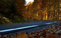 Paysage d'automne avec des feuilles sèches et une route vide Photographie stock