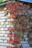 Paysage d'automne avec des raisins photographie stock