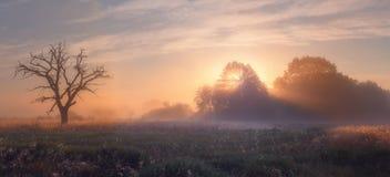 Paysage d'automne avec la brume et les rayons de soleil image stock