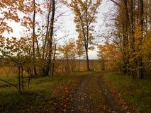 Paysage d'automne avec le chemin forestier photo stock