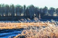 Paysage d'automne avec le gel images libres de droits